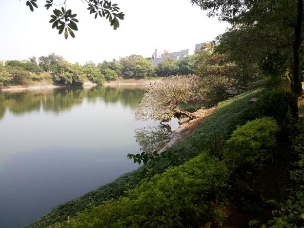 Seepz Pond