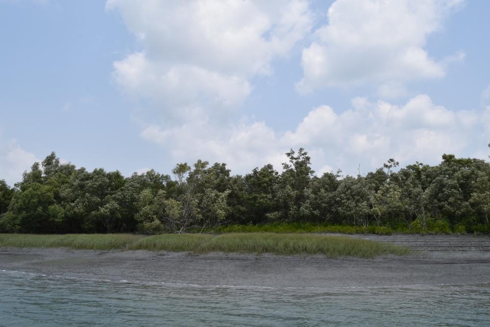 Sundarban Diaries (3/5)