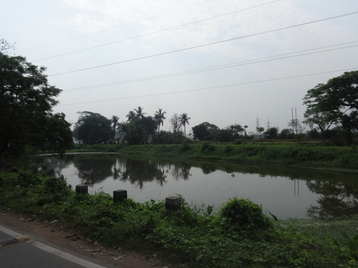 A little pond along the roadside