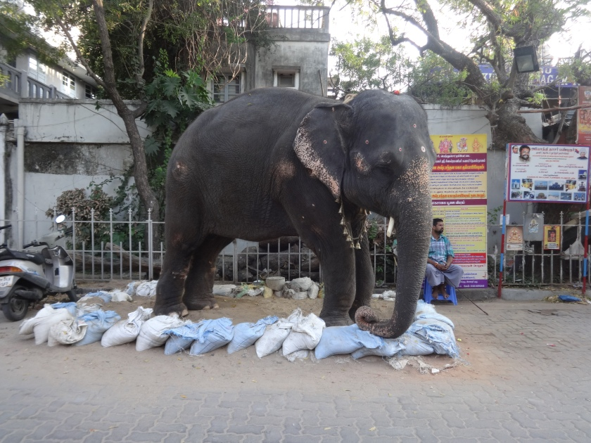 An elephant who gives blessing