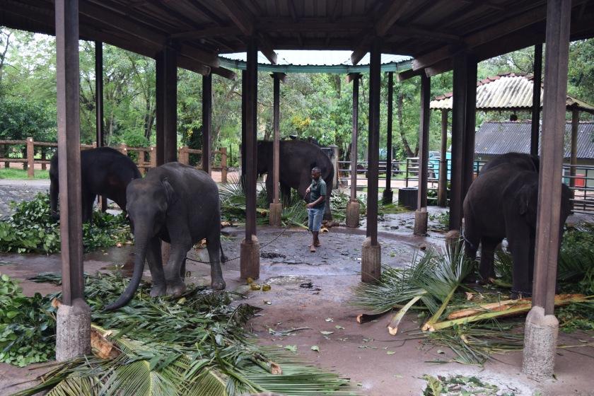 Some more elephants